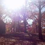 Autumn-In-West-Chester-PA (1)